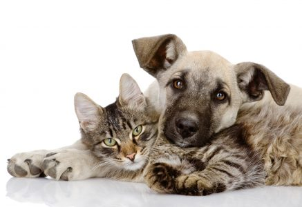 9 Important Health Benefits of Having a Dog or Cat