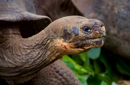 Animals of the Galapagos: 10 Unique Animals You'll Only Find There