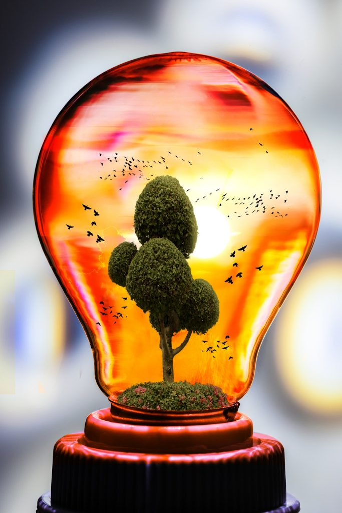 lightbulb with tree and birds inside